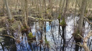 Moor im Wesloer Wald