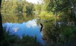 Schwanensee im Wesloer Wald